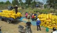 Tiêu thụ lúa gạo ở ĐBSCL: Hợp tác thay vì nhờ giải cứu!