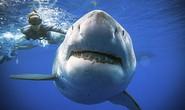 Úc phát triển đồ bơi… chống cá mập