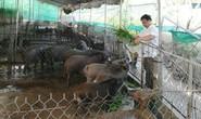 9X mở trang trại nuôi heo rừng, bỏ túi nửa tỉ/tháng