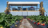Robot triệu USD hái trái cây