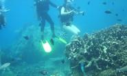 Lặn biển, không được phá san hô