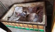Thịt heo bệnh xuất hiện ở Đồng Nai