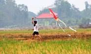 Cánh diều tuổi thơ sau mùa gặt lúa