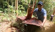Cận cảnh khu rừng gỗ quý ở Quảng Bình bị lâm tặc chặt phá tan hoang