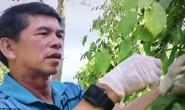 Huỳnh Mau: Lão nông chưa quên bóng đá