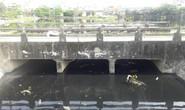 Đà Nẵng: Yêu cầu nạo vét hồ Bàu Trảng hoàn thành trước 30-4