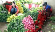 Hoa hồng Đà Lạt khan hàng, sốt giá