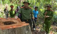 Giám đốc Công an tỉnh Đắk Lắk băng rừng bắt gỗ lậu
