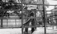 Con voi buồn nhất thế giới qua đời sau 43 năm bị nhốt