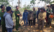 Khởi tố vụ án phá rừng trồng của doanh nghiệp
