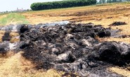 Bị côn đồ đốt cháy rơm vì chưa làm luật bảo kê… cánh đồng