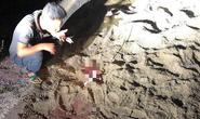 Bé trai 7 tuổi ở Hưng Yên bị đàn chó 6 con cắn tử vong