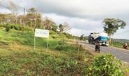 Nguyên bí thư tha thiết xin cấp lại đất rừng sau khi bị thu hồi