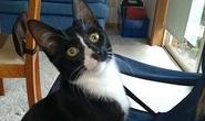 Bị kẹt trong máy giặt 30 phút, mèo con sống sót kỳ diệu