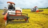 CÁNH ĐỒNG LỚN... HỤT HƠI (*): Mấu chốt là quan hệ doanh nghiệp - nông dân