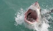 Đang lướt sóng, bị cá mập trồi lên cắn chết