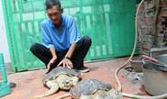 Thả 2 cá thể rùa quý hiếm về biển