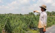 """Quỹ David Dương: """"Một vốn bốn lời"""" cho nhà nông"""