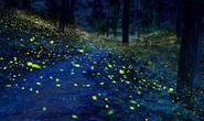 Rừng nấm ma và những nơi tự phát sáng kỳ lạ trên thế giới