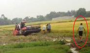 Côn đồ xăm trổ bảo kê gặt lúa vác dao, kiếm truy sát 2 nông dân trọng thương