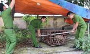 Khởi tố vụ bé trai 7 tuổi ở Hưng Yên bị đàn chó cắn tử vong