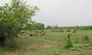 Nhiều sai phạm ở dự án Công viên Sài Gòn Safari