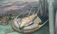 Quái vật bạo chúa 500 triệu năm xuất hiện nguyên vẹn tại Úc