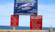 Người phụ nữ bị cá mập cắn chết khi đang lặn