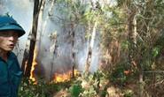 Cháy rừng kinh hoàng ở Hà Tĩnh: Lập chốt chặn trên QL 1A cũ, sơ tán dân