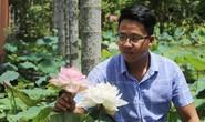 Độc và lạ về giống sen nở hàng trăm cánh tuyệt đẹp ở Quảng Nam