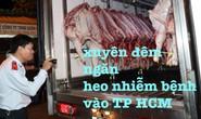 Xuyên đêm ngăn heo nhiễm bệnh vào TP HCM