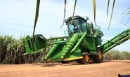 Liên kết sản xuất cánh đồng mía lớn