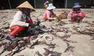 Quảng Nam đề nghị hỗ trợ tiêu thụ hơn 1.000 tấn khô mực