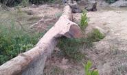Phát hiện cây gỗ quý 100 năm tuổi dưới lòng suối khi đi mò ốc