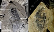 Quái vật 506 triệu tuổi trong mỏ đá y hệt… tàu vũ trụ