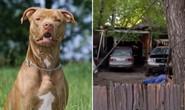 Bị 3 con chó cấu xé, cậu bé 16 tuổi thiệt mạng