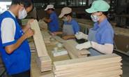 Ngành gỗ không lo nguồn gốc nguyên liệu