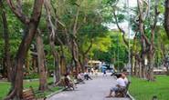 TP HCM thiếu trầm trọng công viên, cây xanh