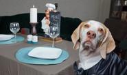 New York tổ chức tuần lễ nhà hàng phục vụ chó
