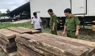 Phát hiện kho chứa gỗ lậu quý ở Trường Sơn