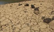 Thừa Thiên -Huế,  Quảng Trị: Cận cảnh sông, hồ trơ đáy vì nắng hạn khốc liệt