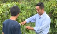 Nông dân lo lắng vì cà phê vàng lá, rụng quả sau khi sử dụng phân bón
