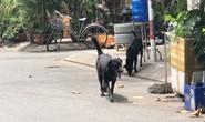 Lại tranh cãi nuôi chó, mèo ở chung cư