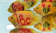 Cả trăm loài cá cảnh đủ sắc màu hút hồn dân chơi thủy sinh ở TP HCM