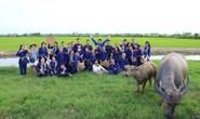 Đồng Tháp níu chân du khách bằng du lịch nông nghiệp sạch
