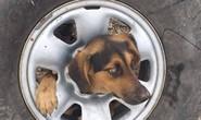 Giải thoát cô chó kẹt đầu không hiểu nổi vào giữa bánh xe