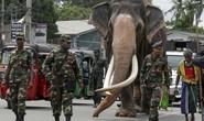 Chuyện về chú voi được quân đội mở đường