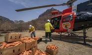 Úc: Mưa cà rốt và khoai lang cứu đói động vật bị cháy rừng