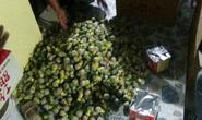 Bắt thanh niên đang chở gần 60 kg pháo đi bán hộ cho người khác