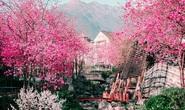 Đi du lịch Trung Quốc, cần làm gì để không dính virus viêm phổi lạ